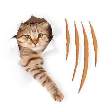 Haftung Katzenhalter in Mietwohnung